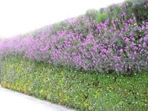 London Wildlife Trust vertical plants wall